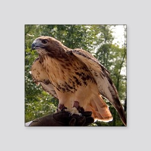 Red Tailed Hawk Ruffled Feath Square Sticker 3&quo