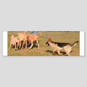 Herding Sticker (Bumper)