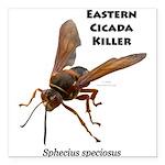 Cicada Killer Square Car Magnet 3