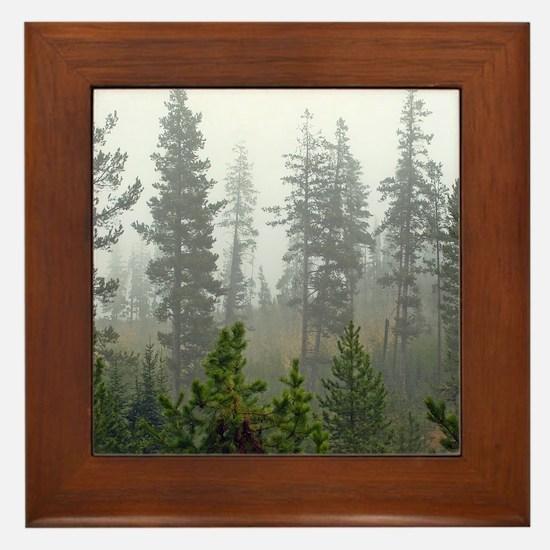 Misty forest Framed Tile