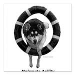 "Malamute Agility Square Car Magnet 3"" x 3"""
