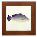 Freshwater Drum fish (aka Sheephead) Framed Tile