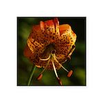 Columbia Lily Square Sticker 3
