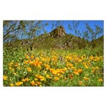 Picacho Peak Gold Poppies Large Poster