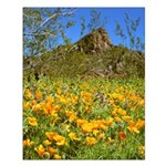 Picacho Peak Gold Poppies Small Poster