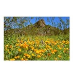 Picacho Peak Gold Poppies Postcards (Package of 8)