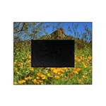 Picacho Peak Gold Poppies Picture Frame