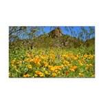 Picacho Peak Gold Poppies Rectangle Car Magnet
