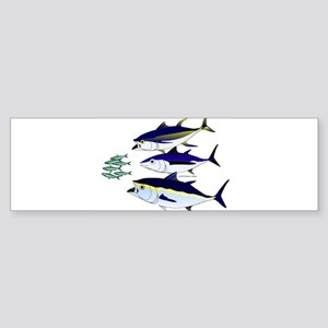 Three Tuna Chase Sardines fish Sticker (Bumper)