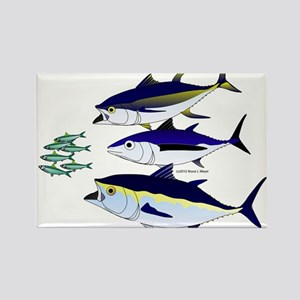 Three Tuna Chase Sardines fish Rectangle Magnet