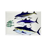 Three Tuna Chase Sardines fish Rectangle Magnet