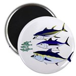 Three Tuna Chase Sardines fish Magnet