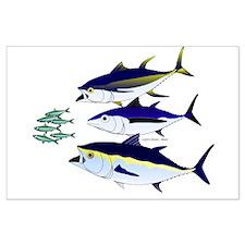 Three Tuna Chase Sardines fish Large Poster