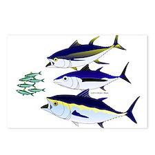 Three Tuna Chase Sardines fish Postcards (Package