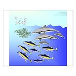 Tuna Birds Dolphins attack sardines Small Poster