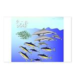 Tuna Birds Dolphins attack sardines Postcards (Pac