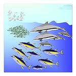 Tuna Birds Dolphins attack sardines Square Car Mag