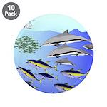 Tuna Birds Dolphins attack sardines 3.5
