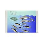 Tuna Birds Dolphins attack sardines Rectangle Magn