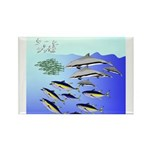 Tuna Birds Dolphins attack sardines Rectangle Magn