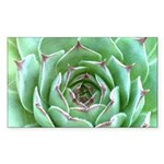 Succulent Sticker (Rectangle 10 pk)