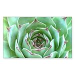 Succulent Sticker (Rectangle 10 pk)