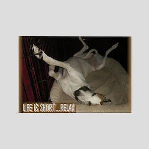 Roaching Greyhound Rectangle Magnet