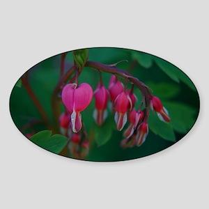 Bleeding Hearts Oval Sticker