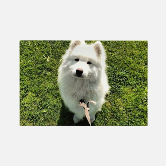 Puppy out for a walk Rectangle Magnet