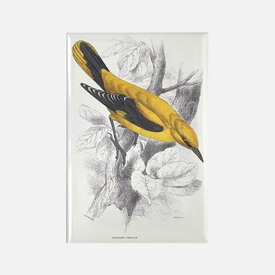 Golden Oriole Bird Rectangle Magnet