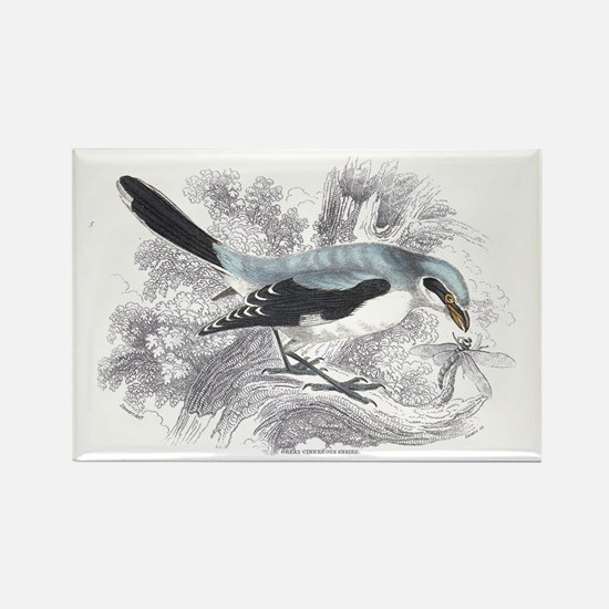 Great Cinereous Shrike Bird Rectangle Magnet