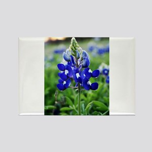 Lonestar Bluebonnet Rectangle Magnet