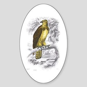 Osprey Bird Oval Sticker