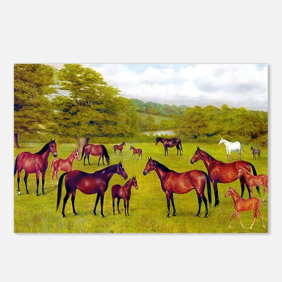 MARES & FOALS Postcards (Package of 8)