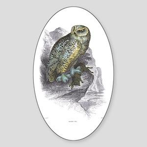 Snowy Owl Bird Oval Sticker