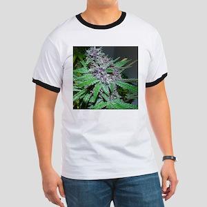 Organic Purple Bud Ringer T