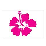 Hot pink hibiscus Postcards