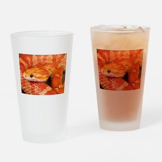 Corn Snake Drinking Glass