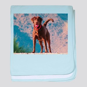 Lovable Chocolate Lab baby blanket