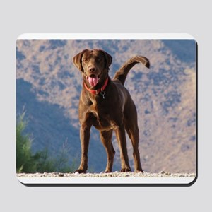 Lovable Chocolate Lab Mousepad
