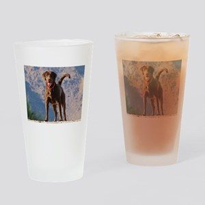 Lovable Chocolate Lab Drinking Glass
