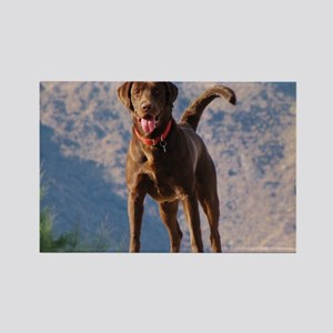 Lovable Chocolate Lab Rectangle Magnet
