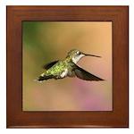 Flying Hummingbird Framed Tile