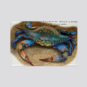 Atlantic Blue Crab Rectangle Magnet