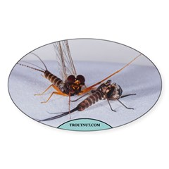 Molted Leptophlebia Mayfly Oval Decal