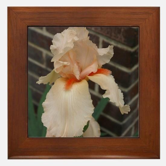 Pale Orange Iris Framed Tile