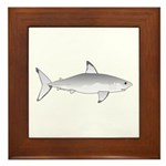 Great White Shark Framed Tile