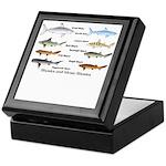 Sharks and More Sharks Montage Keepsake Box