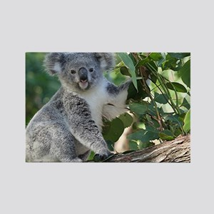 Cute koala Rectangle Magnet