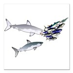 Two White Sharks ambush Tuna Square Car Magnet 3